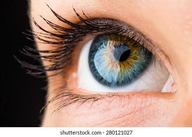 beautiful macro of an eye looking up