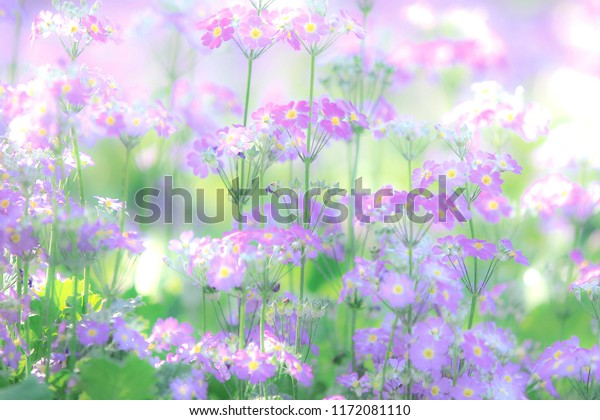 Beautiful Macro Flowers On Blur Background Stock Photo Edit Now