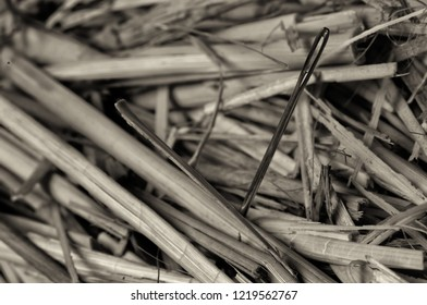 Beautiful Macro of needle in a haystack