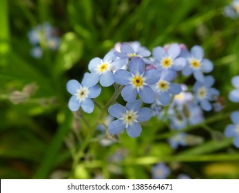 beautiful macro photography in spring