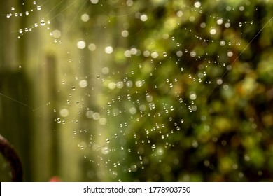 A beautiful Macro shot of dewdrops on a spiders web whilst another spiders web is out of focus causing a stunning overlay.
