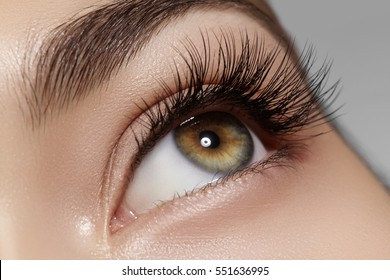 Beautiful macro shot of female eye with classic clean makeup. Perfect shape of eyebrows, brown eyeshadows and long eyelashes. Cosmetics and make-up. Closeup macro shot of fashion natural eyes visage