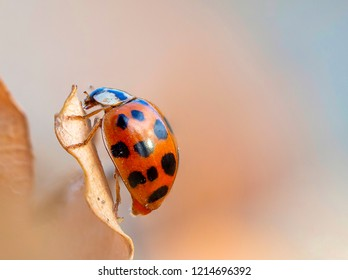 Beautiful macro shot of a lady bug