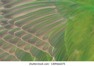 Beautiful macro wing parrot feather pattern  texture background