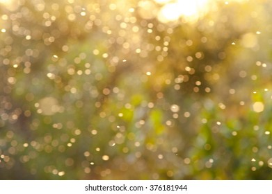 beautiful magical forest at sunset with sunlight