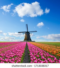 Beautiful magical spring landscape with a tulip field and windmills in the background of a cloudy sky in Holland. Charming places.