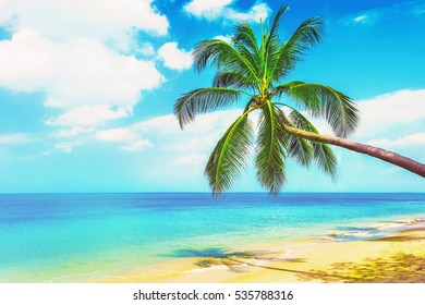 Beautiful Maldive beach. View of nice tropical beach with palms around. Holiday and Vacation concept