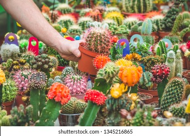 Beautiful male customer chooses cactus plants in the retail store. Gardening In Greenhouse. Botanical garden, flower farming, horticultural industry concept