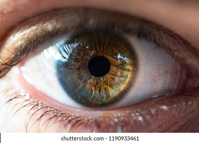 Beautiful man eye macro closeup shot. Really colorful.