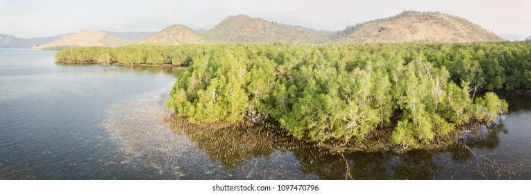 A beautiful mangrove forest serves as a nursery for fish near Pulau Lembata, Indonesia. This remote, tropical region, within the Coral Triangle, harbors extraordinary marine biodiversity.