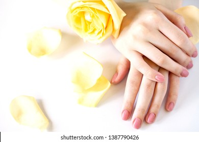 Beautiful manicured woman's nails with pink polish isolated. Nails care. Manicure, pedicure beauty salon. Beautiful rose yellow blossoms.