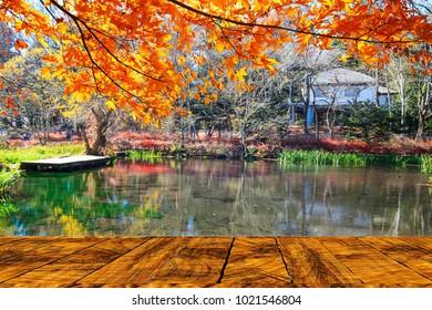 The Beautiful maple season at Kumoba Pond, Karuizawa, Japan