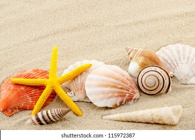 Beautiful marine items on a sand in summer still life theme.