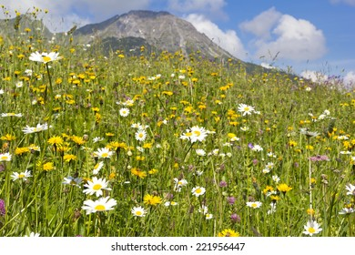 Beautiful meadow in the Alps with different flowers, was seen in Austria.