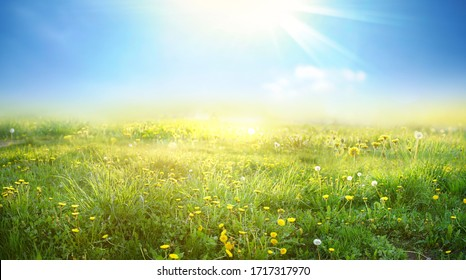 Beautiful meadow field with fresh grass and yellow dandelion flowers in nature against a blurry blue sky with clouds. Summer spring natural landscape.