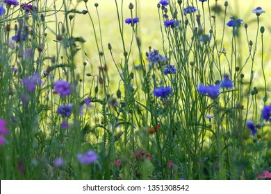 Beautiful meadow field with wild flowers. Spring Wildflowers closeup. Health care concept. Rural field.