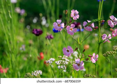 Beautiful meadow field with wild flowers. Spring or summer wildflowers closeup. Health care concept. Rural field. Alternative medicine. Environment