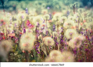Beautiful meadow - flowering, blooming flowers (beautiful landscape, beautiful nature)