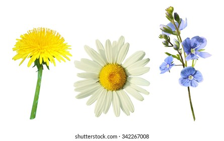 beautiful meadow flowers on a white background