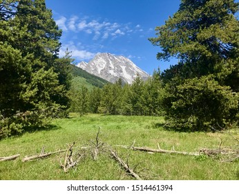 Beautiful Meadow in Grand Teton National Park, Wyoming