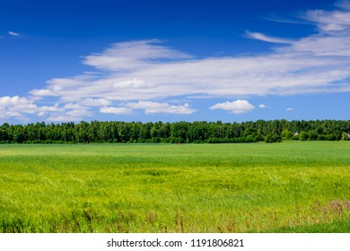 Beautiful meadow with green grass on blue sky background with clouds. Typical summer landscape on Saaremaa island, Estonia