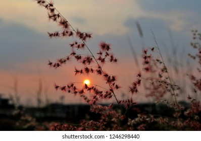 The beautiful meadow in sunset moment.Natual blackground