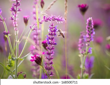 Beautiful meadow with wild flowers