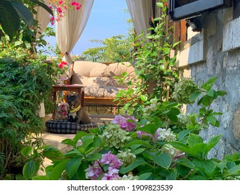 Beautiful Mediterranean blooming garden, cozy patio, sunny windless courtyard decorated vibrant flowers and lush green tropical plants. Funny pug dog on pillow is guarding the house.