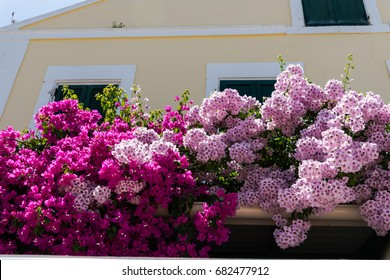 Beautiful mediterranean flowers