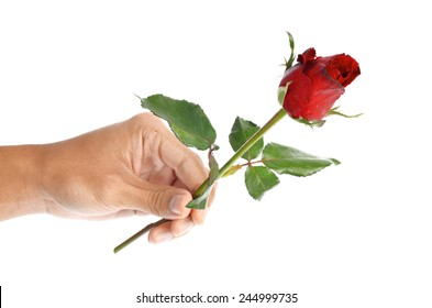Beautiful men hand holding a red rose isolated on white background