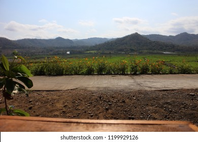 Beautiful menoreh mountain view taken from Geblek Pari restaurant in Kulon Progo Yogyakarta, there are huge of rice paddy field scenery before harvesting period