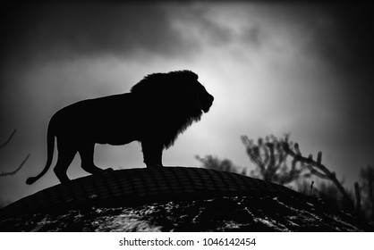 Beautiful Mighty Lion. Black and white, dramatic photo