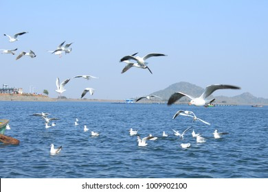 Beautiful migratory birds enjoying at Patratu lake in Ranchi city in Jharkhand state of  India