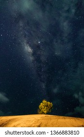 Beautiful milkyway and silhouette of tree on a night sky with stars and space dust in sands