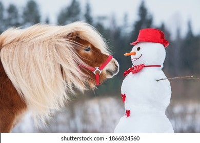 Beautiful miniature shetland breed pony stallion with a snowman dressed in red hat and bow tie. Horse in winter.