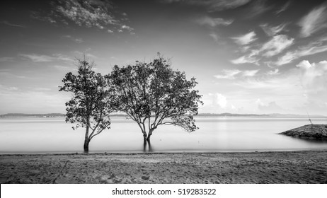 Beautiful minimalist black and white seascape with standing trees. Shot taken in daytime with long exposure