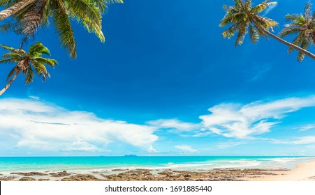 Beautiful minimalist tropical beach, coconut tree and blue sky for background