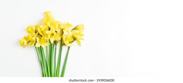 beautiful minimalistic layout for spring greeting card, invitation, banner on white background. composition of yellow fresh flowers of daffodils with place for text. simple flat lay.