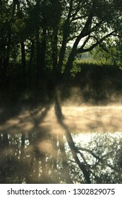 Beautiful mist over the water in the shade of the trees by the river