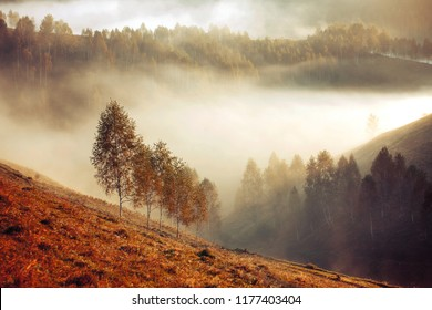 Beautiful misty autumn morning in the mountains