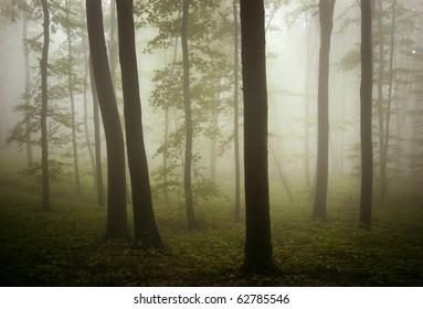 beautiful misty forest