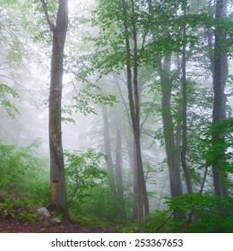 beautiful misty forest landscape summer background day