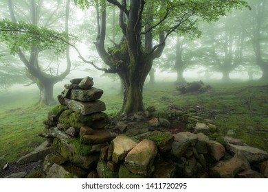 beautiful misty forest on spring day