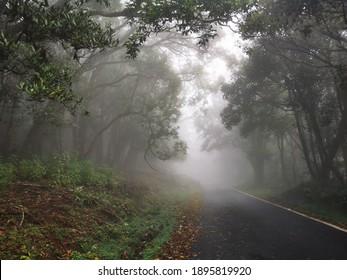 Beautiful Misty forest way ,Nilgiri district,Tamilnadu India