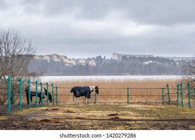 Beautiful misty landscape spring view. Rural scene with horses in a paddock with water and sky in the background.