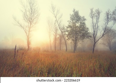 Beautiful misty sunny morning in a wild field on the edge of the forest