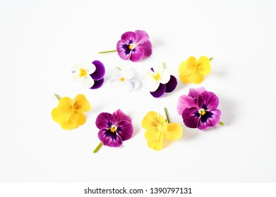 Beautiful mix color pansy violet flower in tricolor, white, yellow and violet or purple on White background.