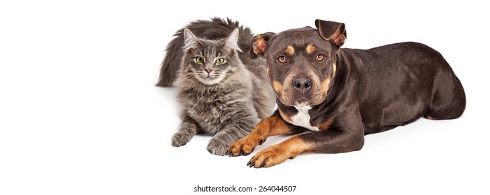 Beautiful mixed breed dog and cat laying together. Image sized to fit a popular social media timeline cover image placeholder.