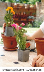 beautiful modern bright colorful close up photo of young woman's hands gardening with small shovel tool beautiful flowers in pot on table on sunny hot summer day in garden