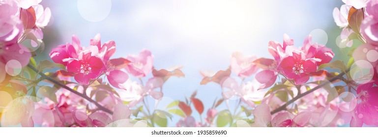 Beautiful modern spring banner with pink flowers against the blue sky. Panoramic natural sunny landscape. Branches of blossoming sakura in the rays of sunlight. Mixed media poster.